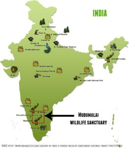 Going Green in India 1