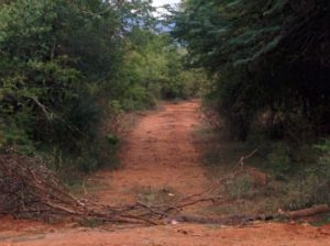 Pathways reserved for elephants. Usually littered with elephant dung.